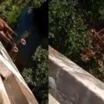 """Morre ator consagrado de """"Flor do Caribe e Salve Jorge""""."""